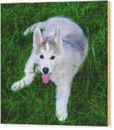 Siberian Huskie Wood Print