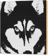 Siberian Husky Wood Print by Sharon McLain