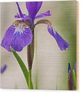Siberian Iris Blossom Wood Print
