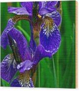 Siberian Iris Wood Print