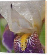 Siberian Iris I Wood Print