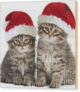 Siberian Kittens In Hats Wood Print