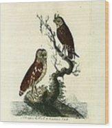 Siberian Owl And Acadian Owl Wood Print
