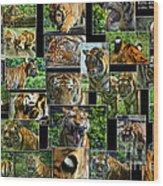 Siberian Tiger Collage Wood Print