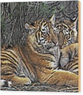 Siberian Tiger Cubs Endangered Species Wildlife Rescue Wood Print