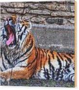 Siberian Tiger Nap Time Wood Print
