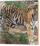 Siberian Tiger - Standing Wood Print