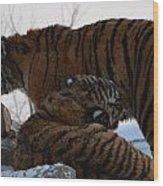 Siberian Tigers Wood Print by Brett Geyer