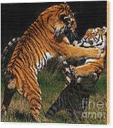 Siberian Tigers In Fight Wood Print