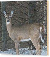 Side Of The Road Deer Wood Print