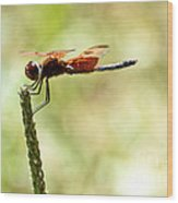 Side View Of A Calico Pennant Wood Print