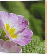 Side View Of A Spring Pansy Wood Print