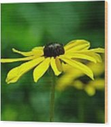 Side View Of A Yellow Flower Wood Print