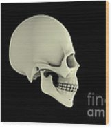 Side View Of Human Skull Wood Print
