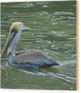 Sidelong Look From A Pelican Wood Print by Sarah Crites