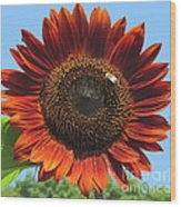Sienna Sunflower Wood Print