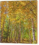 Sierra Aspen Wood Print