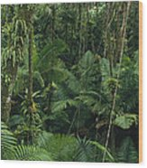 Sierra Palm Trees El Yunque Puerto Rico Wood Print
