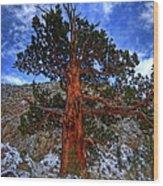 Sierra Pine Wood Print