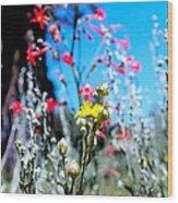 Sierra Wild Flowers II Wood Print
