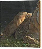 Siesta 2 Wood Print by Aaron Blaise