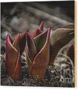 Sign Of Spring In Red Wood Print