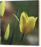 Signs Of Spring II Wood Print