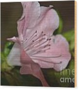 Silent Pink Photo B Wood Print