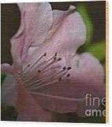 Silent Pink Photo D Wood Print
