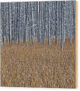 Silent Sentinels Of Autumn Grasses Wood Print
