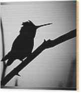 Silhouette Humming Bird Wood Print