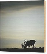Silhouette Of A Male Caribou At Sunset Wood Print