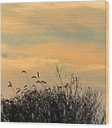 Silhouette Of Grass And Weeds Against The Color Of The Setting Sun Wood Print