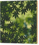 Silhouette Of Japanese Maple Leaves Wood Print