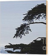 Silhouette Of Monterey Cypress Tree Wood Print