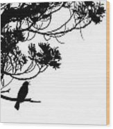 Silhouette Of Singing Common Blackbird In A Tree Wood Print by Stephan Pietzko