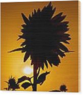 Silhouette Of The Sunflower Wood Print
