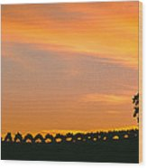 Silhouette Of Vineyard At Sunset, Paso Wood Print