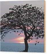 Silhouette Sunset Wood Print
