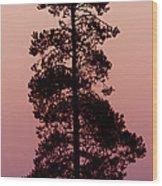 Silhouette Tree At Sunrise Wood Print