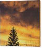Silhouetted Evergreen Tree Wood Print
