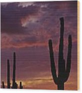 Silhouetted Saguaro Cactus Sunset  Wood Print