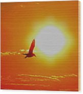 Silhouetted Seagull  Wood Print