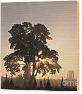 Silhouetted Tree With Sun Rays Wood Print