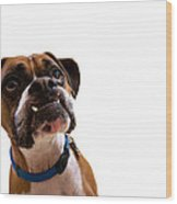 Silly Boxer Dog Wood Print