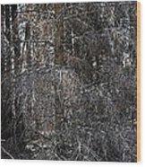 Silver Cedar Wood Print