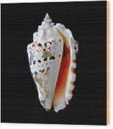 Silver Conch Seashell Wood Print