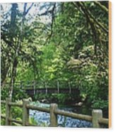 Silver Falls Stream Wood Print