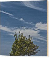 Silver Lake Dune With Tree Grove And Cirrus Clouds Wood Print