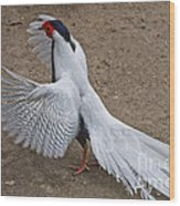 Silver Pheasant Wood Print